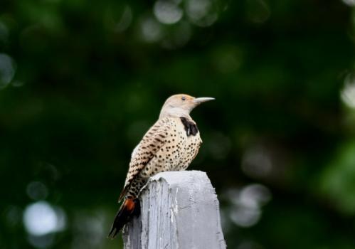 BC風景鳥1