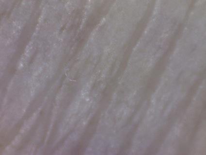 1205121554_2.jpg