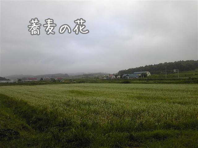 SH3701850001_R.jpg