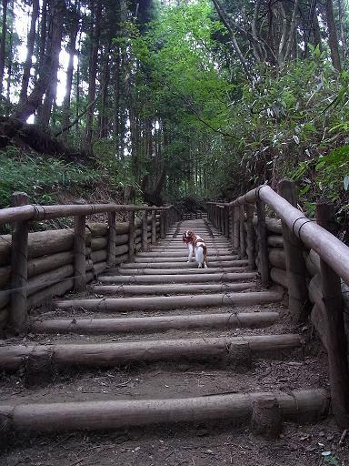階段、階段