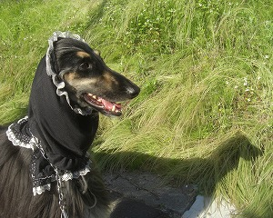 ロン毛の草