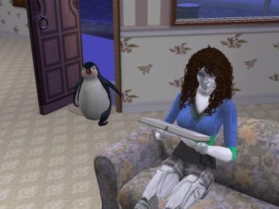 ペンギン再来訪