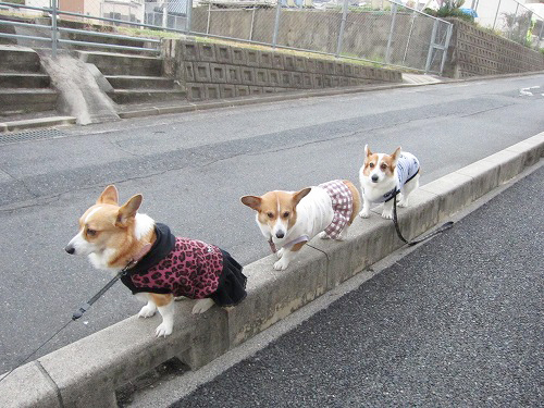 3ワンで縁石歩き~