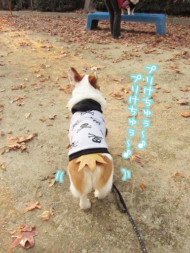 プリけちゅ星犬(笑)
