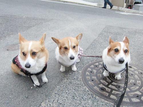 お散歩最後も3ワンで☆