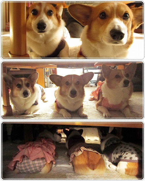 テーブルの下で☆