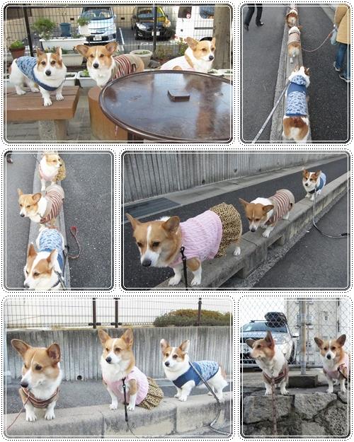 3ワンでお散歩☆