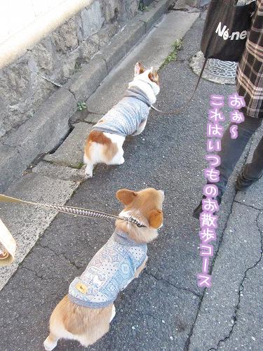 いつものお散歩コース