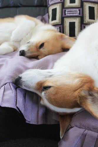 疲れて寝るおふたりさん