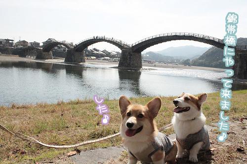 錦帯橋にやってきました