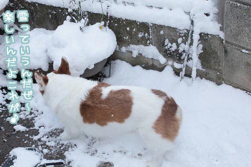 雪っていうんだぜ~