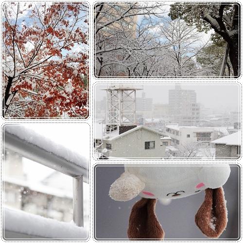 雪降った~