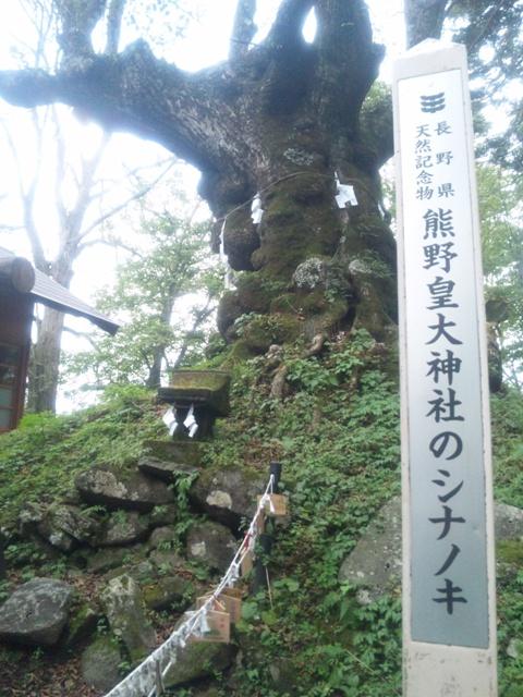 熊野皇大神社 シンノキ