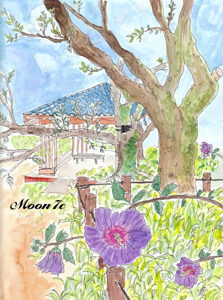 神代植物公園のムクゲ