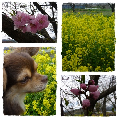 ツナ(春)