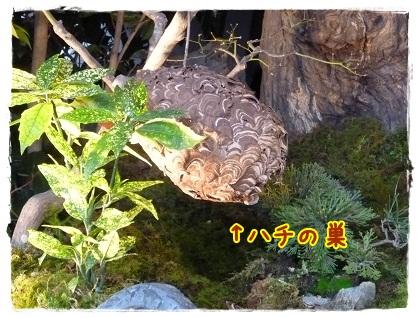 雛山②蜂の巣