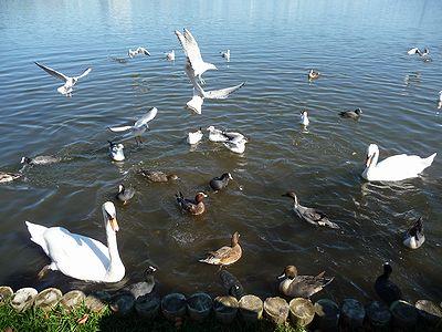 本日の千波湖②