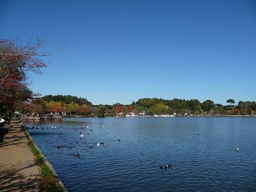 11月11日 千波湖
