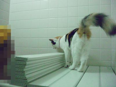 お風呂覗き?