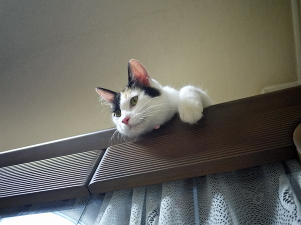 見降ろす猫