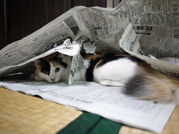 新聞紙ガサガサ