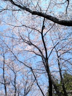 sakaura02