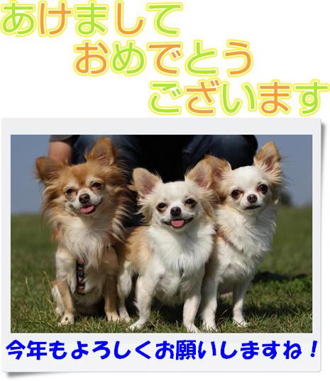moji212_llus-vert.jpg