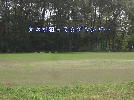 2011.11.14 5