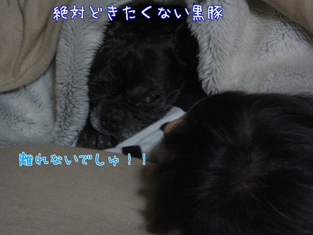 2012.1.11 6