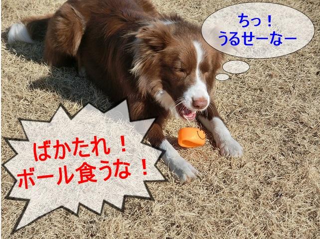 ボール食い