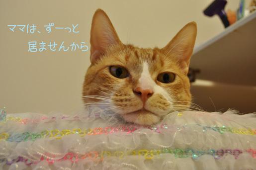 DSC_0012_20111224131226.jpg