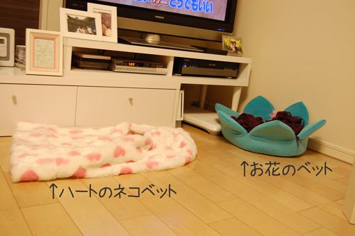 DSC_0013_20110104002225.jpg