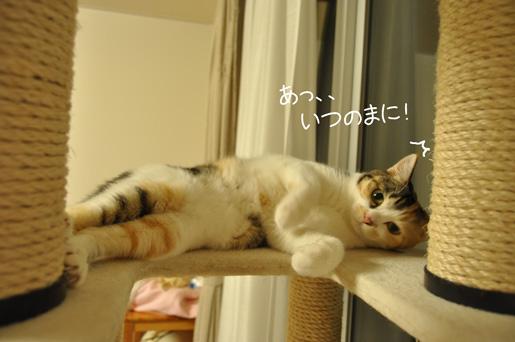 DSC_0039_20111113193755.jpg