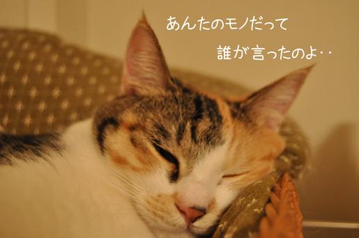 DSC_0049_20111109215217.jpg