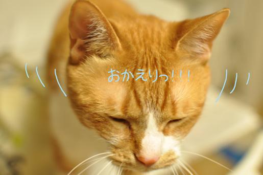 DSC_0061_20120603234534.jpg