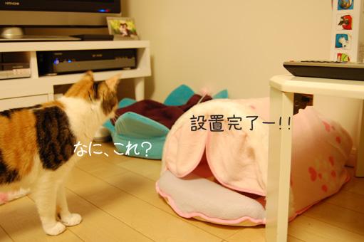 DSC_0062_20110104002224.jpg