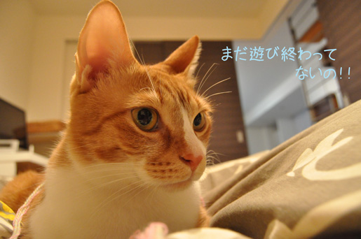 DSC_0067_20111230221915.jpg