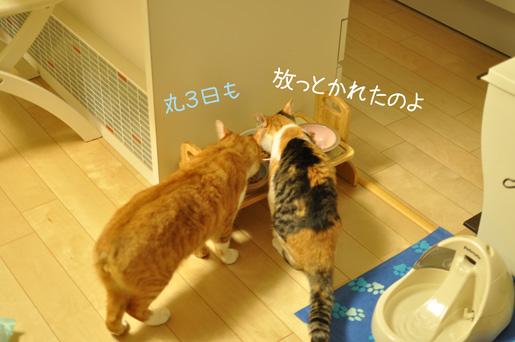 DSC_0068_20120603234533.jpg