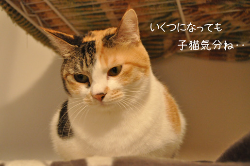 DSC_0077_20111230221914.jpg