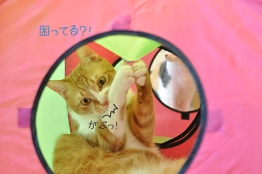 DSC_0110_20110111213310.jpg