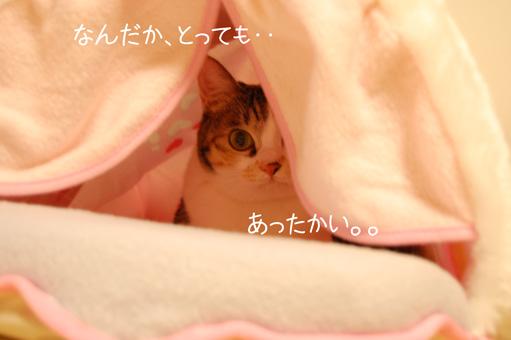 DSC_0117_20110104002237.jpg