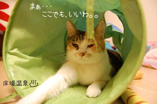 DSC_0237_20110105235041.jpg