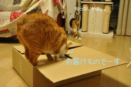 DSC_0290_20120422232051.jpg