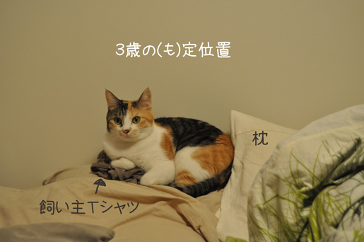 DSC_0334_20111101231020.jpg