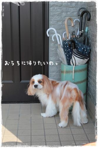 IMG_9865-.jpg