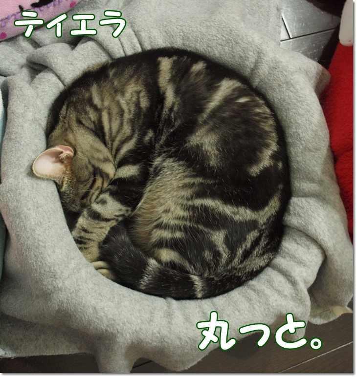 1tierrakorokoroyukimaru20130116.jpg