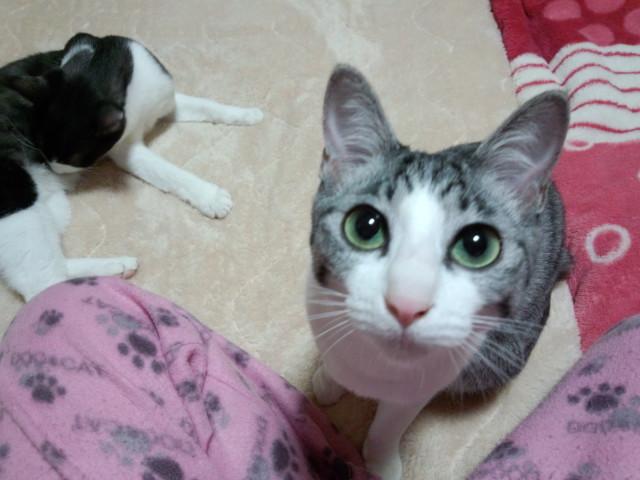 1urawacatsmoblog_ae094004.jpg
