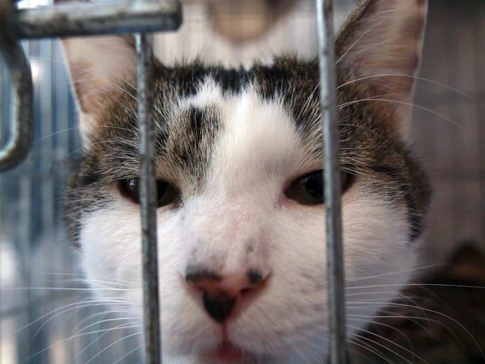 urawacats20110305 (5)