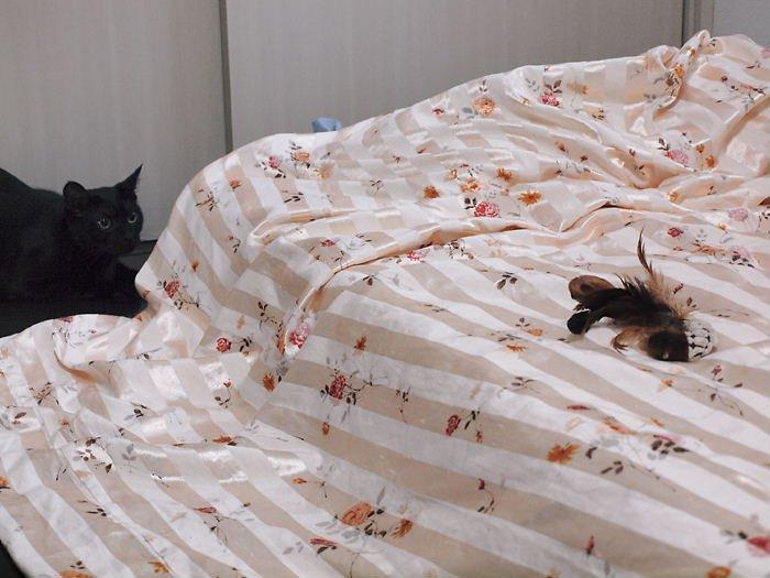 blackruicat20110406 (3)
