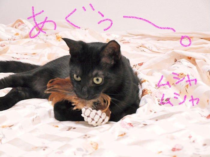 blackruicat20110406 (2)